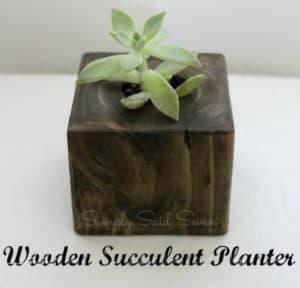 Succulent-thumbnail-e1464739927896